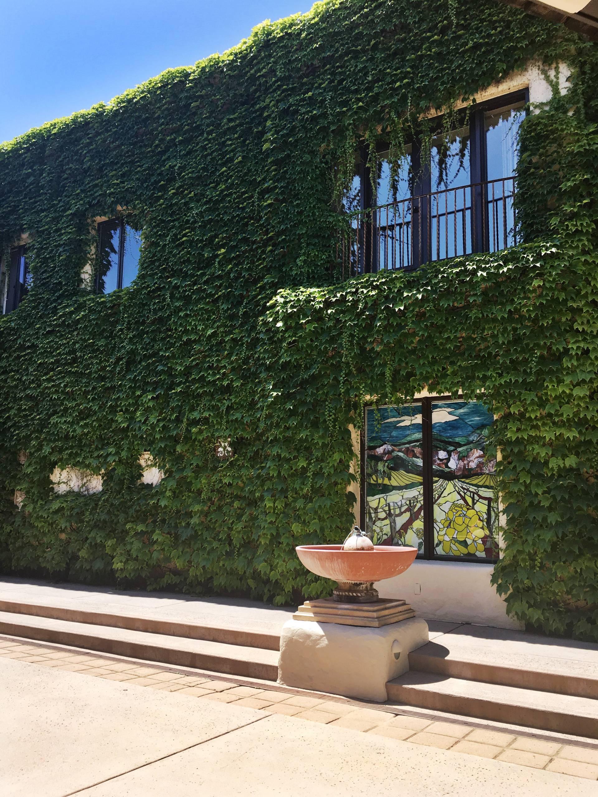 napa-valley- ivy walls