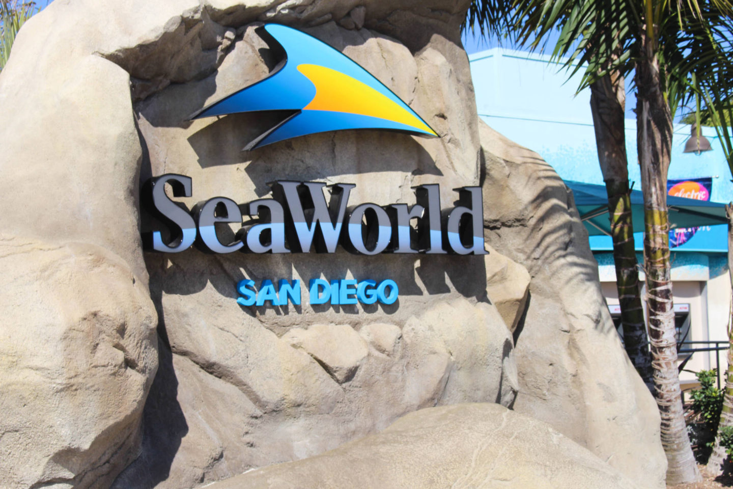 What you must sea and do while at Sea World San Diego for the day!